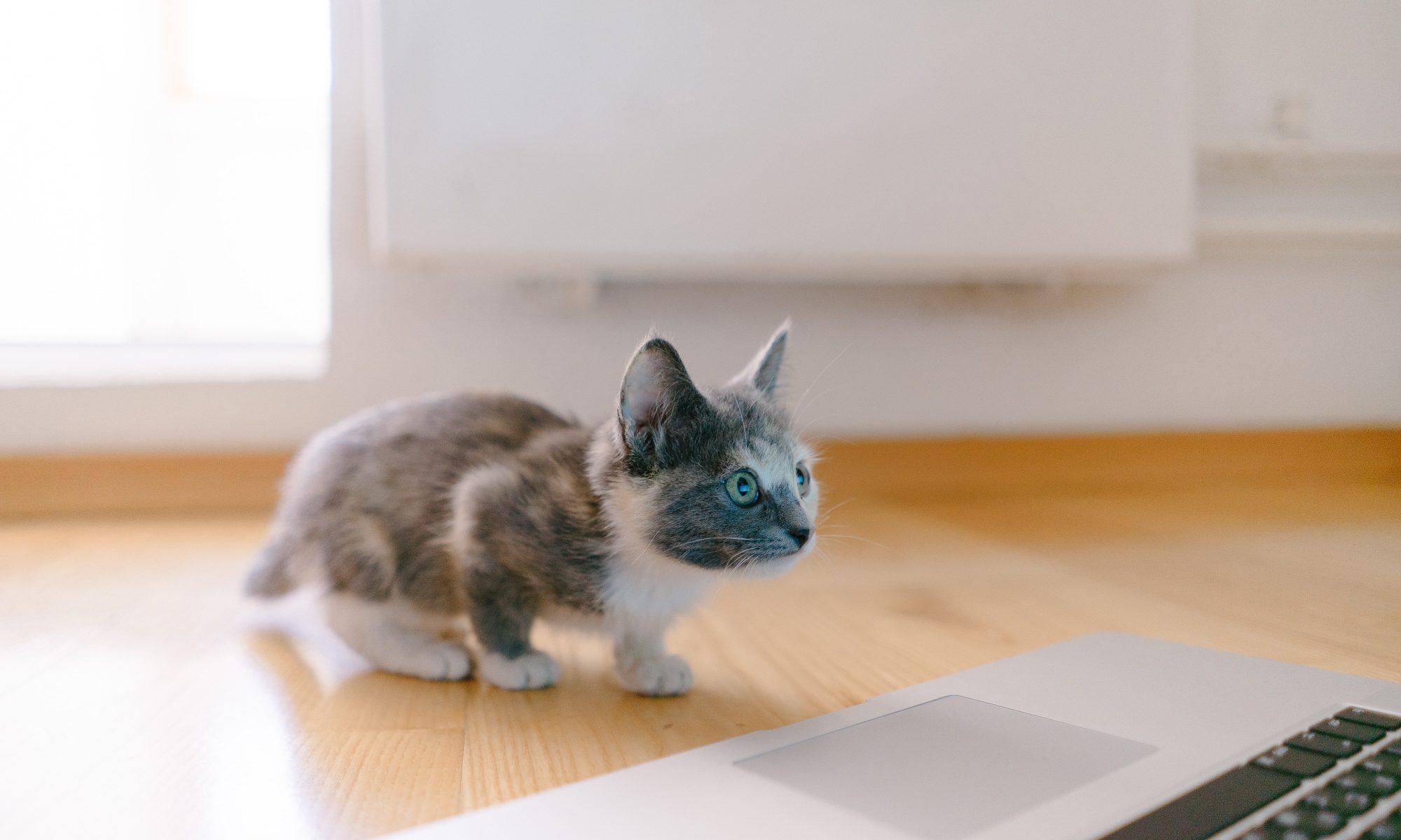 its kitten